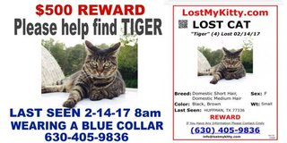 $500 reward for the safe return of Missing Cat named TIGER. in Kingwood, Texas
