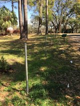 Six chain link fence posts. Free for removal in Beaufort, South Carolina