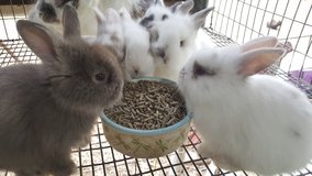 Bunnies.lionheads in Conroe, Texas