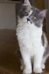 LOST - Kitten 3/12 in Colorado Springs, Colorado