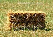 SQUARE BALES OF HAY in Lawton, Oklahoma