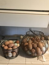 Farm fresh eggs in Vista, California