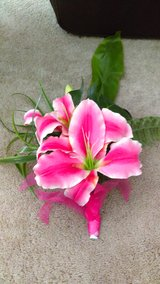 Pink Lilies in Lawton, Oklahoma