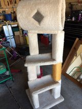 Like New Large Cat Condo in Chicago, Illinois