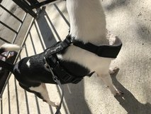 Two Harnesses - perfect condition in Fairfield, California