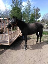 2 year old Filly in Alamogordo, New Mexico