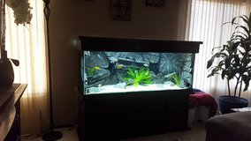 100g Fish tank / Aquarium with stand and canopy in Oceanside, California