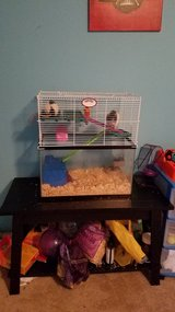 Two pet rats with all accessories and food in Leesville, Louisiana