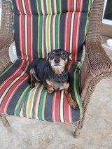 Tiny Needs a Good Home in Alamogordo, New Mexico