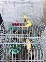 Canary/Canario in Fairfield, California