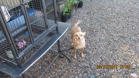 A LITTLE SWEETHEART in Vacaville, California