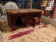 Brownie and Oreo --6 month old male Guinea Pigs in Ramstein, Germany