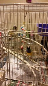 PAIR LADY GOULDIANS CAGE AND NEST in Vista, California