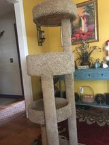 Very nice Cat Tower in Camp Lejeune, North Carolina