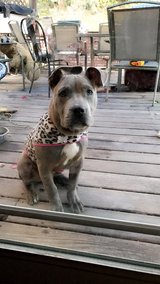 Beautiful Puppy To Good Home in Vista, California