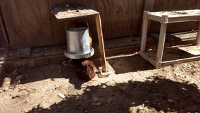 Chicken Feeder and Waterer in Macon, Georgia