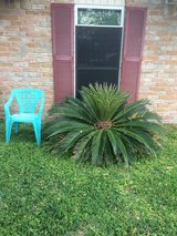Palm ~ Free in Spring, Texas
