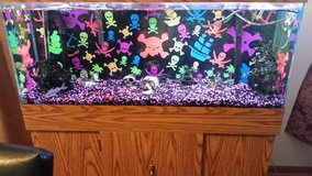 55 Gallon Custom Fish/Reptile Tank with Base and all Accessories in Naperville, Illinois