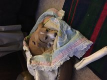 Dog cat supplies needed in Bolingbrook, Illinois