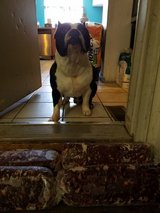 Meat for dog in Joliet, Illinois