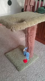 Cat scratching post small in Morris, Illinois