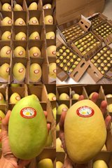 Philippine Mangoes in bookoo, US