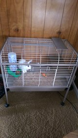 Bunny with cage and supplies in Rolla, Missouri