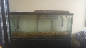 55 gallon tank with fluval filter and supplies in Morris, Illinois