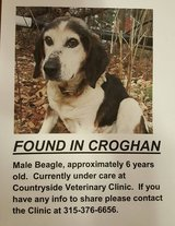 Dog found in Croghan area in Watertown, New York