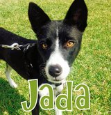 JADA needs a home! in Okinawa, Japan