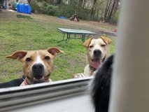 Needing Fosters and forever homes ASAP for death row dogs and cats in Lumberton, North Carolina