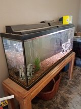 55 gal tank in Yucca Valley, California