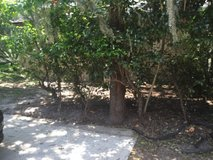 free bushes in The Woodlands, Texas