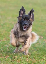 LEOHAYES DOG TRAINING AND SERVICES in Lakenheath, UK