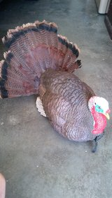 Turkey Decoy in Fort Leonard Wood, Missouri