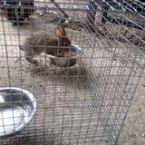 Bunny in Fort Polk, Louisiana