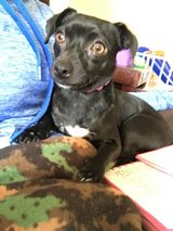 Forever home for our chiweenie in Fort Irwin, California