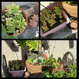Bench/Succulent/Pottery Lot in Fairfield, California
