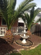 Palm trees in Vacaville, California