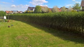 KEEPING YOUR LAWN GREEN, HEDGE TRIMMING/ WEED PULLING in Ramstein, Germany
