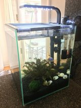 Established 5 Gallon Tank - Fish Included! in Fort Huachuca, Arizona