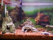 30gal Fish Tank with 2 Fish in Fort Carson, Colorado