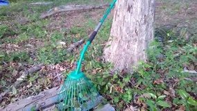 Rake for leaves in Warner Robins, Georgia