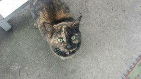 FOUND cat on the Churchill Neighbor page Oswego,IL in Bartlett, Illinois