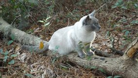 Lost Cat on Ladys Island, SC in Beaufort, South Carolina