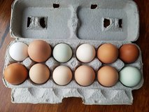 Farm Fresh Eggs in Bolingbrook, Illinois