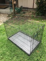 Dog kennel in Vacaville, California