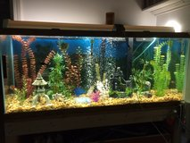 55 Gallon Aquarium With Fish in Camp Lejeune, North Carolina