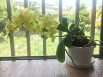 orchids & house plant in Okinawa, Japan