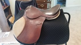 English Saddle in Shorewood, Illinois